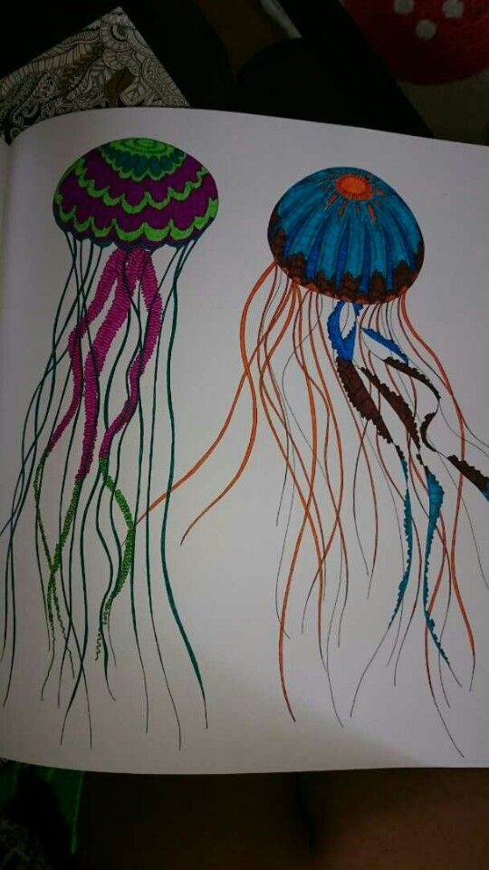 Animal Kingdom Coloring Book Jellyfish On Books And