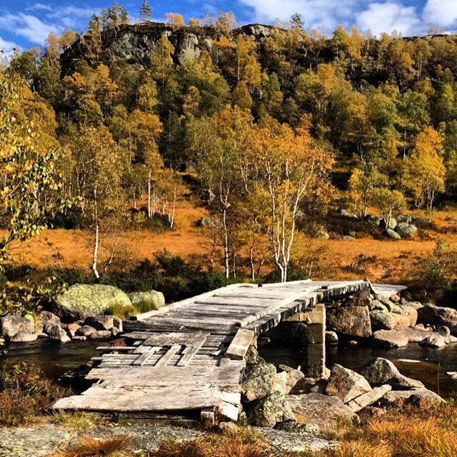 Autumn is a extraordinary time of the year here in Stavanger. @ mereteg76 thank you for this beautiful naturepicture! #regionstavanger #Norway #visitnorway