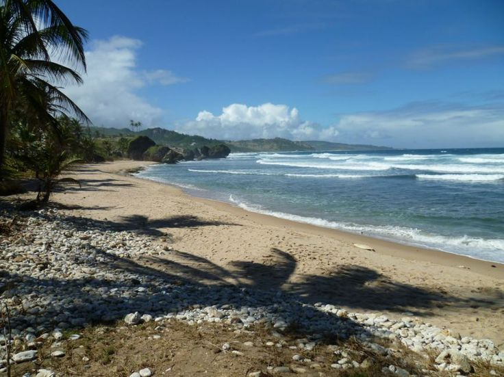 50 Best Beautiful Barbados Images On Pinterest: 17 Best Images About Beautiful Barbados Vacation Ideas On