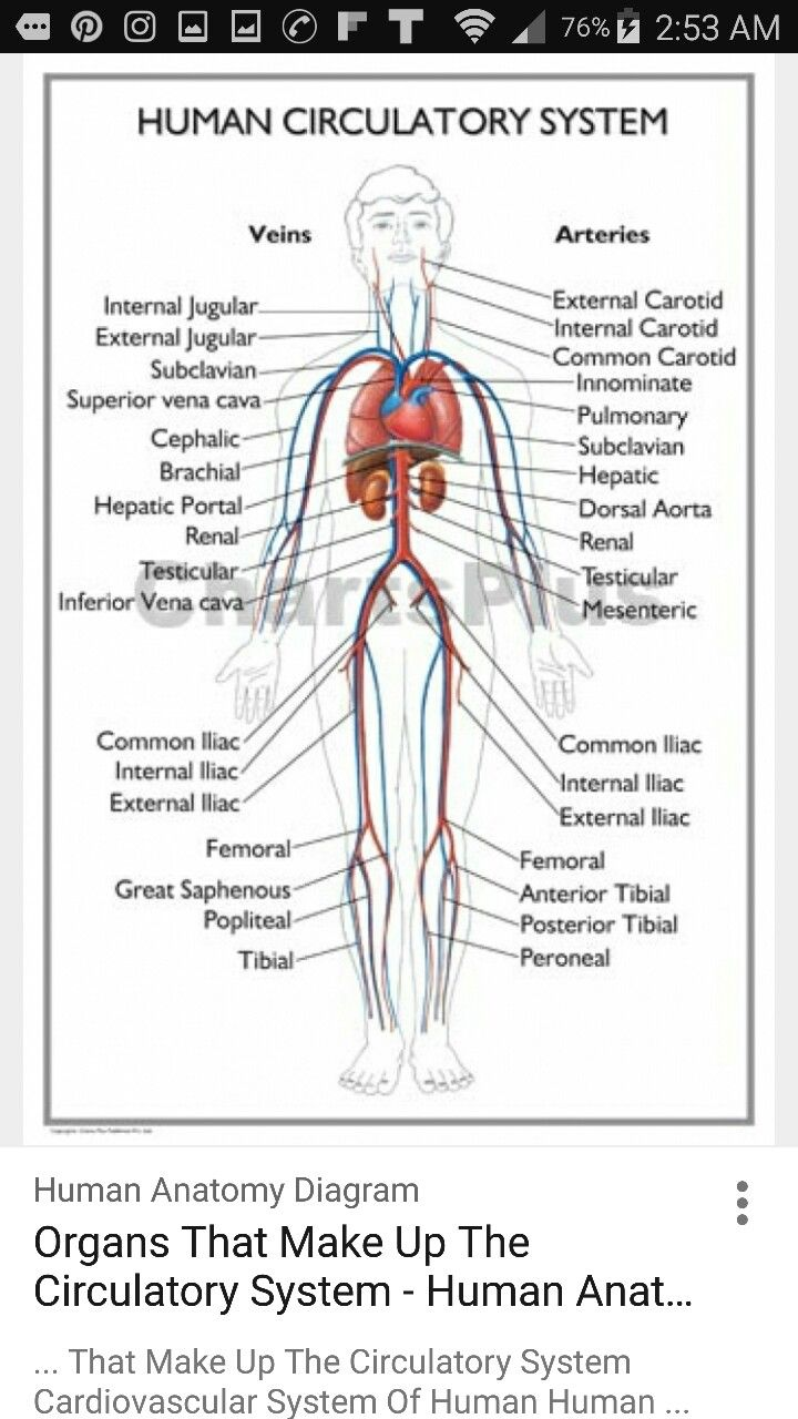 7 best gi images on pinterest anatomy cranial nerves and