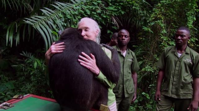 25 best ideas about big hugs on pinterest snoopy hug sweet hug and elephants. Black Bedroom Furniture Sets. Home Design Ideas