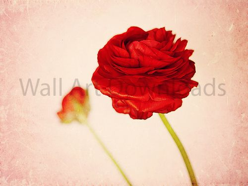 Download this red flower to print out and hang on your walls