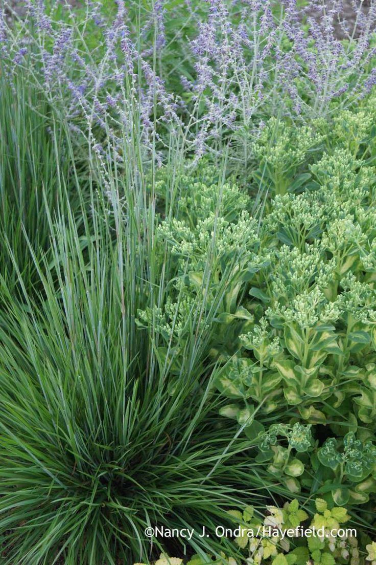 98 best plant combos images on pinterest plant garden plants