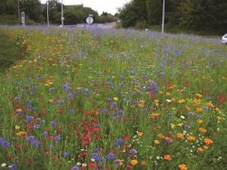 How to create a mini wild flower meadow