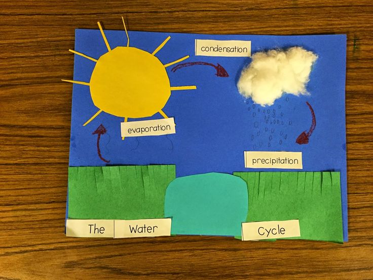 First Grade Fanatics: Water Cycle