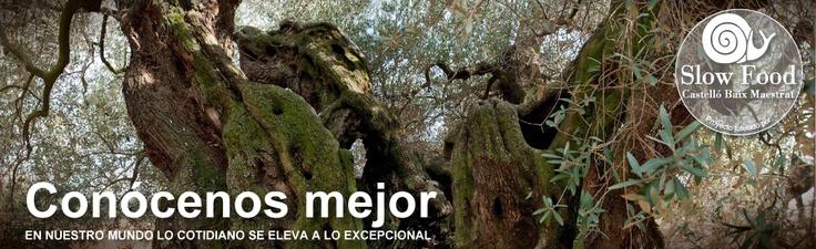 Aceite de oliva virgen extra K de olivos milenarios - oilkshop  http://www.oilkshop.com    Posiblemente el mejor aceite del mundo, procede única y exclusivamente de olivos catalogados y certificados con más de 1000 años de antigüedad, muchos superan incluso los 2000 años, de la variedad autóctona Farga.  Un autentico producto Baluarte de Slow Food