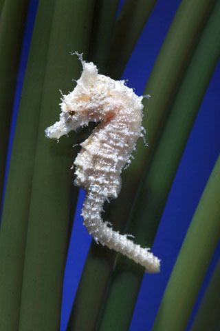 Mysterious Beautiful Graceful Seahorse                                                                                                                                                      More