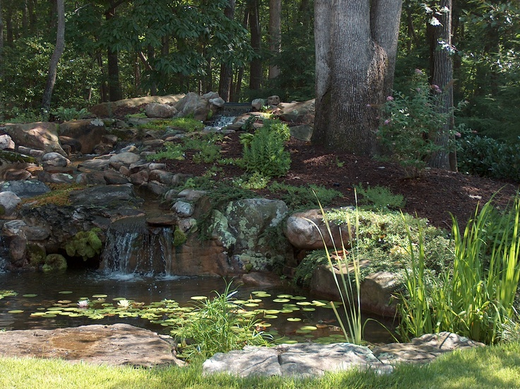 Fish Pond In Your Backyard : Backyard fish pond  in the watering hole  Pinterest
