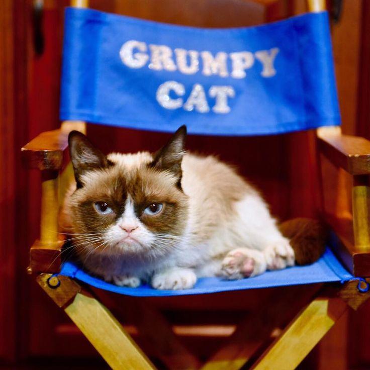 188 best grumpy cat images on pinterest