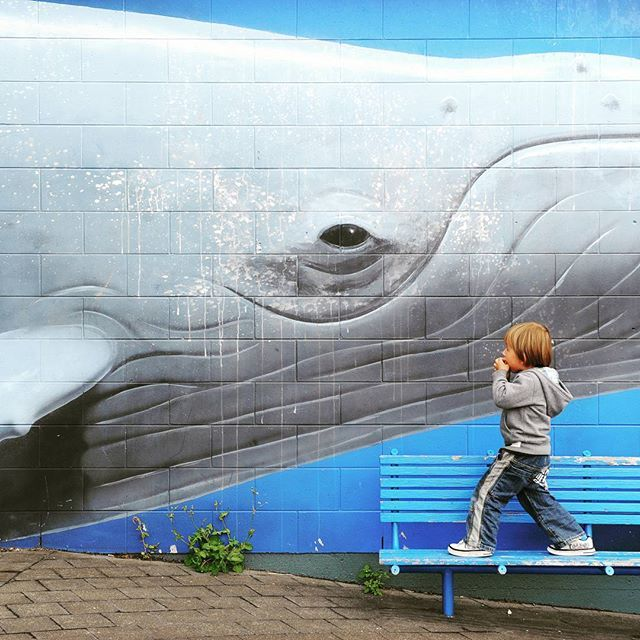 Have you ever seen to the eyes of a whale?  This boy has! #staringcontest #kaikoura #newzealand #uusiseelanti #whale #whalewatching #valas #boy #poika #eye #silmä #blue #grey #sininen #travel #traveling #instatravel #travelblogger #matkablogi #blogi #reissu #matka #matkalla #instago #trip #graffiti #nature #photooftheday