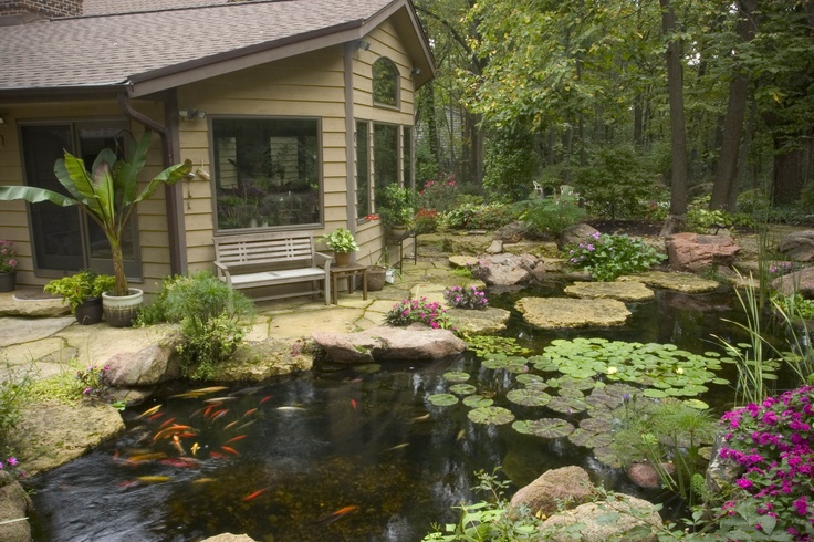 Room with large windows has a great view of the backyard for Large outdoor fish ponds