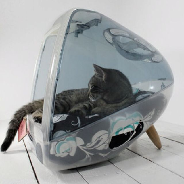 Keep you cat entertained with this charming reuse!