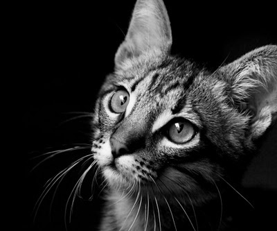Keep cats away from the garden - Πως να απομακρύνουμε τις γάτες από το γκαζόν και τις ζαρντινιέρες