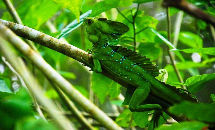 Le plein de chlorophylle !  Ressourcez-vous au Costa Rica cet hiver - Parc National de #Tortuguero #voyage #costarica