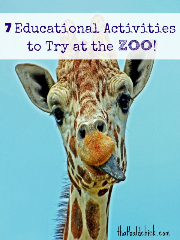 7 Educational Activities to Try at the Zoo @thatbaldchick