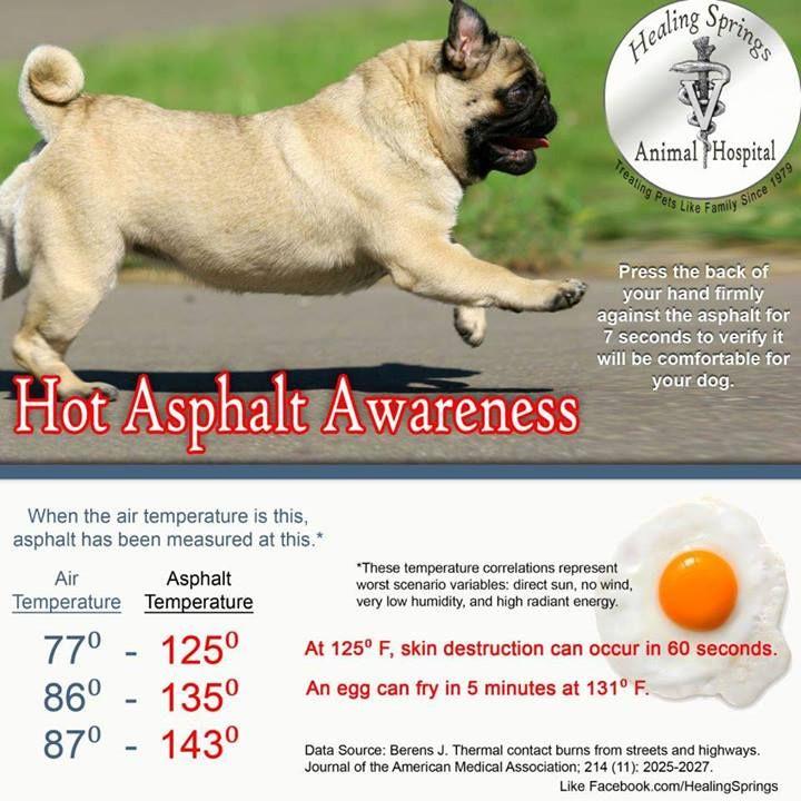 Hot Asphalt Awareness! summer safety pets facebook