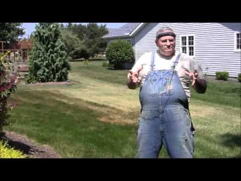 How to Get Rid of Japanese Beetles. Mike talks about a variety of ways to do this.