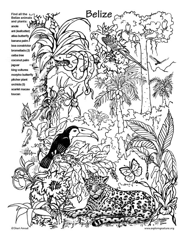 Belize Rainforest Hidden Picture And Coloring Page