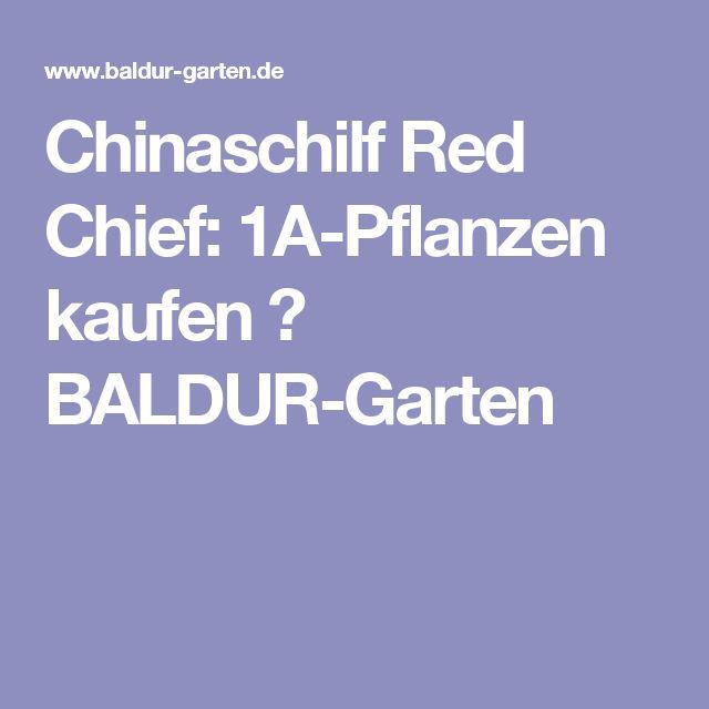 Spectacular Chinaschilf Red Chief A Pflanzen kaufen BALDUR Garten