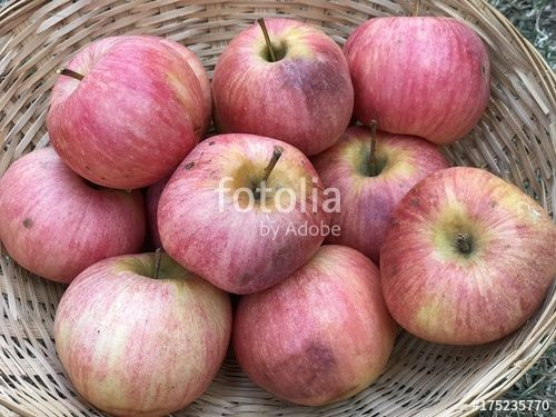 "Download the royalty-free photo ""Many red organic apples in a basket, autumn season "" created by yournameonstones at the lowest price on Fotolia.com. Browse our cheap image bank online to find the perfect stock photo for your marketing projects!"