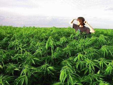 Skutočné obete legalizácie marihuany/konope. (www.pavlasx.cz, XII/2014)