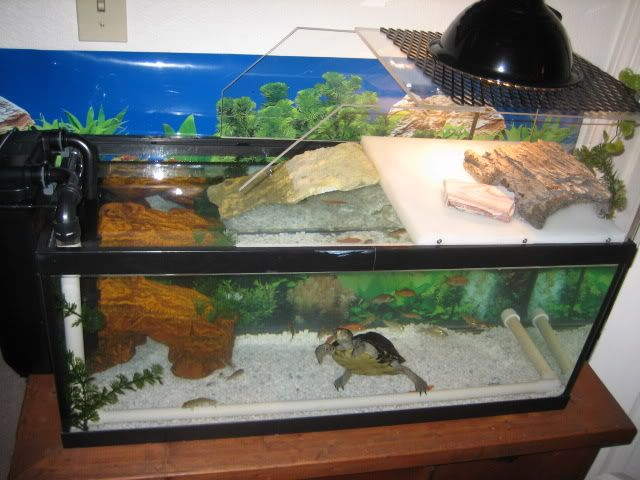 Diy turtle topper turtle stuff pinterest turtles and for Square pond ideas