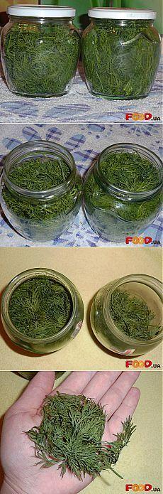Хранение укропа на несколько месяцев свежим без заморозки - Кулинарные рецепты на Food.ua