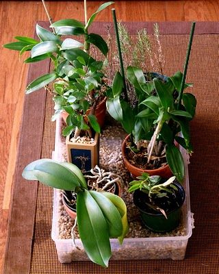Houseplant Care Guides: Orchid Care 101 #Orchids http://orchids.poororchidsgrowing.info/