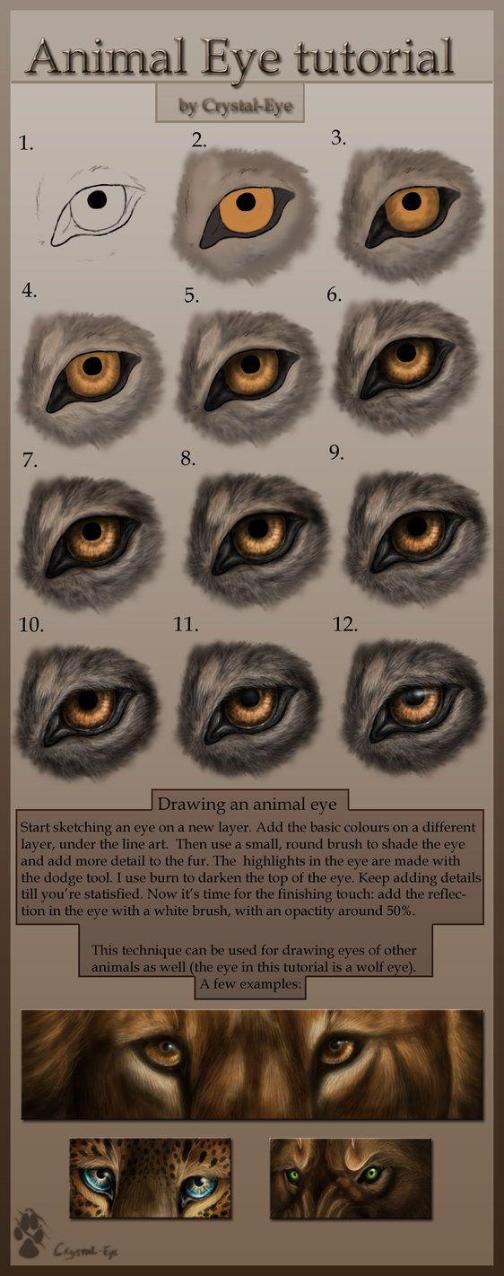 Not Exactly Human But Wanted To Save This One Animal Eye Tutorial By  ~crystal
