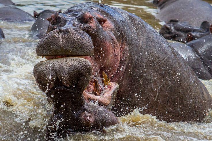 watergevecht (gemaakt in Serengeti)