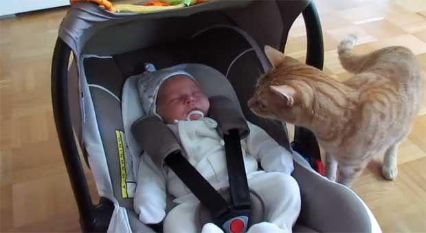 Δείτε πως αντιδράει μία γάτα σε κινήσεις μωρού! (video) http://bit.ly/1iOJk4p