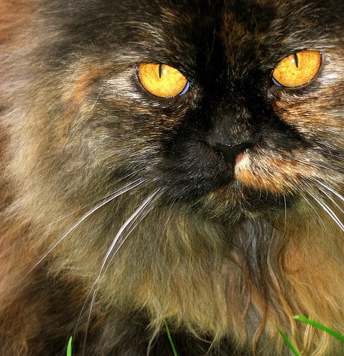 #myphoto A good friend with amber eyes...