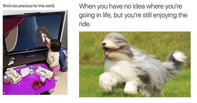 76 Memes So Wholesome You Ll Go To Meme Heaven Memes Dog List Dog Memes