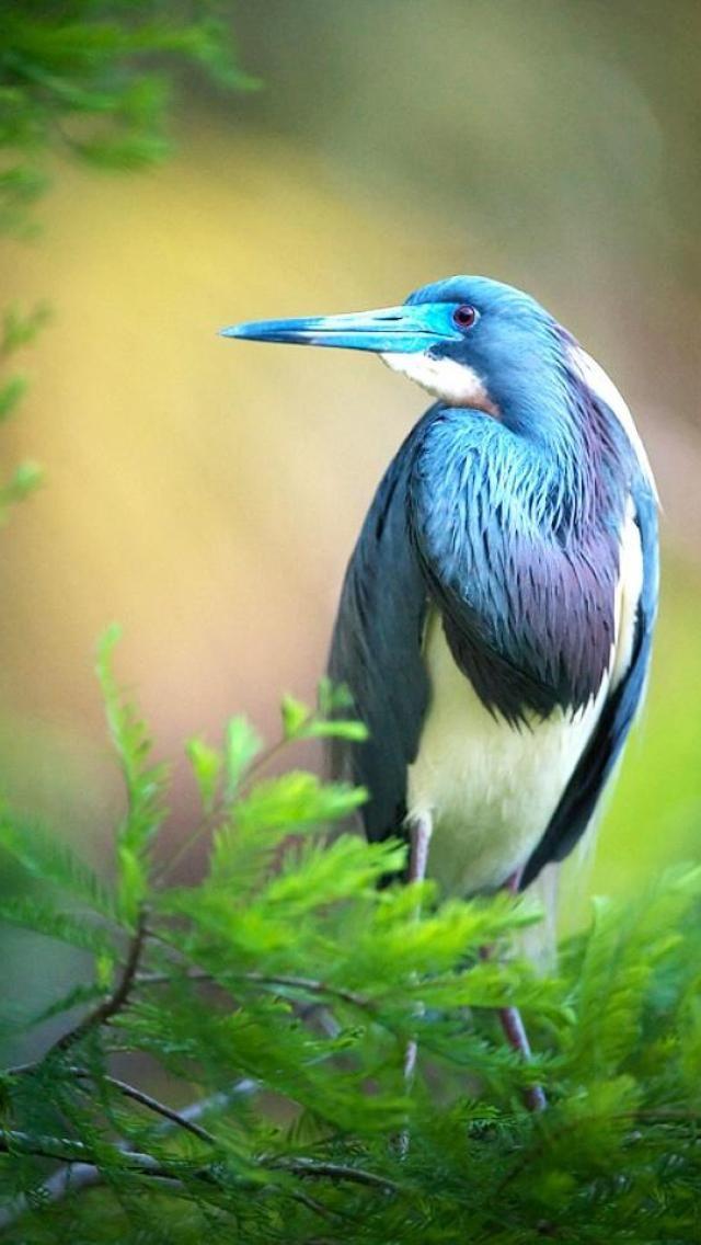 colors, bird, Animals