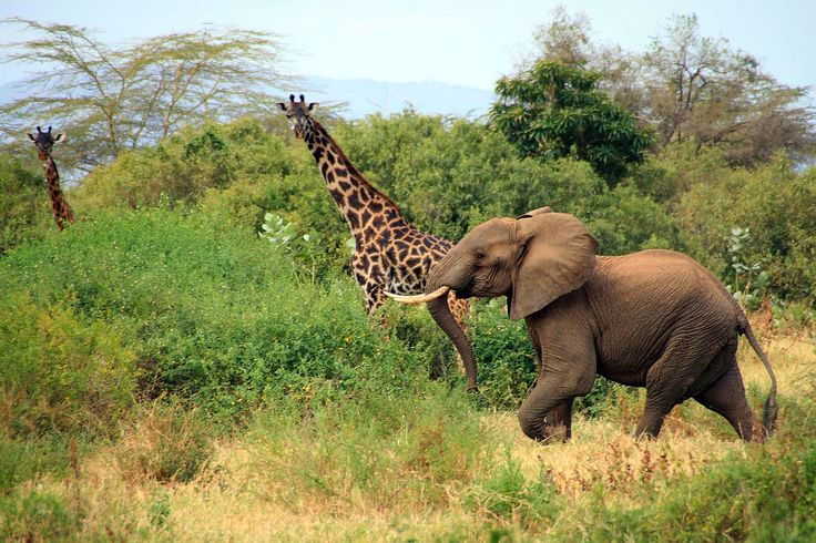 It's #WildlifeWednesday and we would love to be exploring #LakeManyara   Serengeti Gems Tanzania Parks