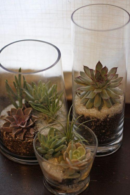 plantes succulentes mini pot fleur verre