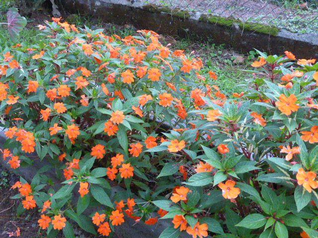 Cerro Azul Vivero Novios naranjas