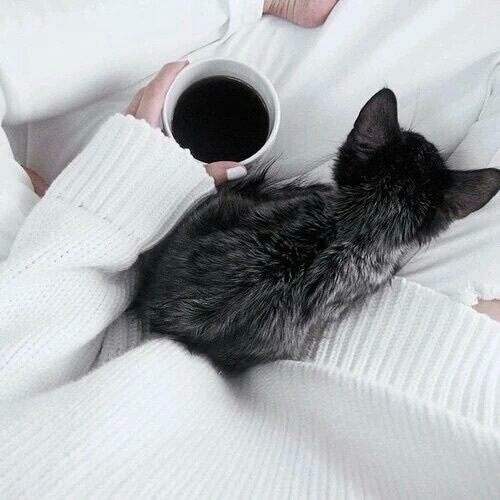 autumn, blanket, cat, coffee, cozy, cute, fall, leaves, nails, pumpkin, sweater, tea, tumblr, warm, white
