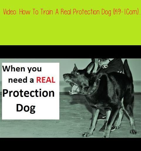 How To Train A Real Protection Dog K9 1 Com How To Train A