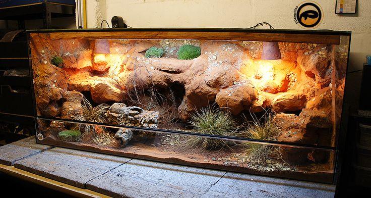 Bearded dragon vivarium habitat