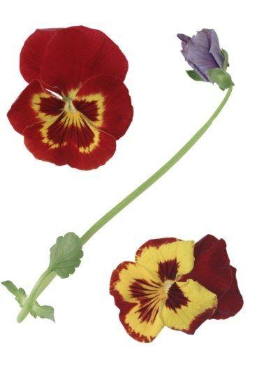 d233cryptez le langage des fleurs