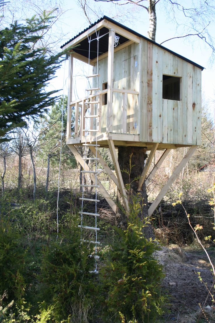 The magic tree house 4