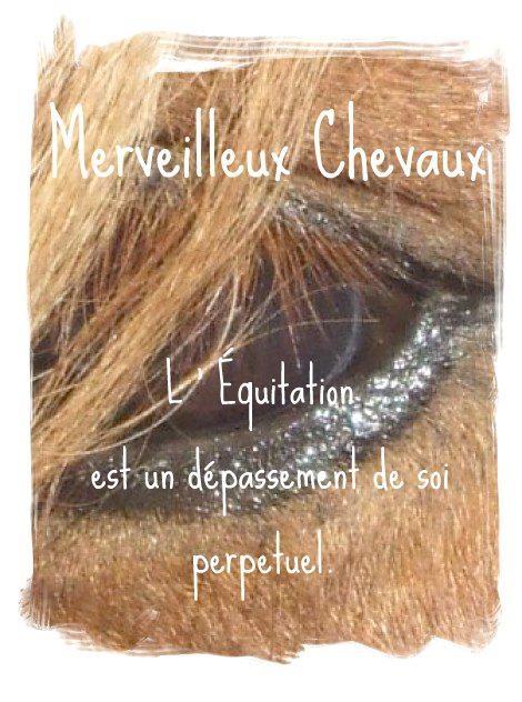 Merveilleux Chevaux