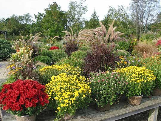 79 best Fall Gardening images on Pinterest | Autumn flowers ...