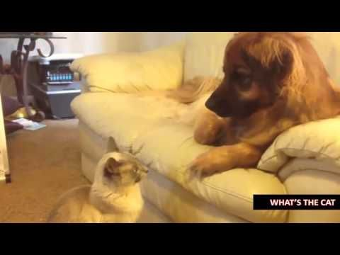 Funny Cat   Funny Cats Compilation 2015   Top Funny Cats Videos 2015