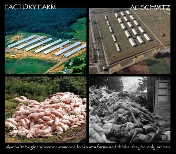 factory farms and animal cruelty essay Argument for animal rights  argument for animal rights ever since the society for the prevention of cruelty to animals in england in 1824 was formed, there have been long running debates on the topic of animal rights.
