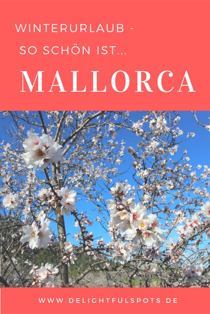 Mallorca Reise | Mandelblüte | Rundreise |Reiseziele.