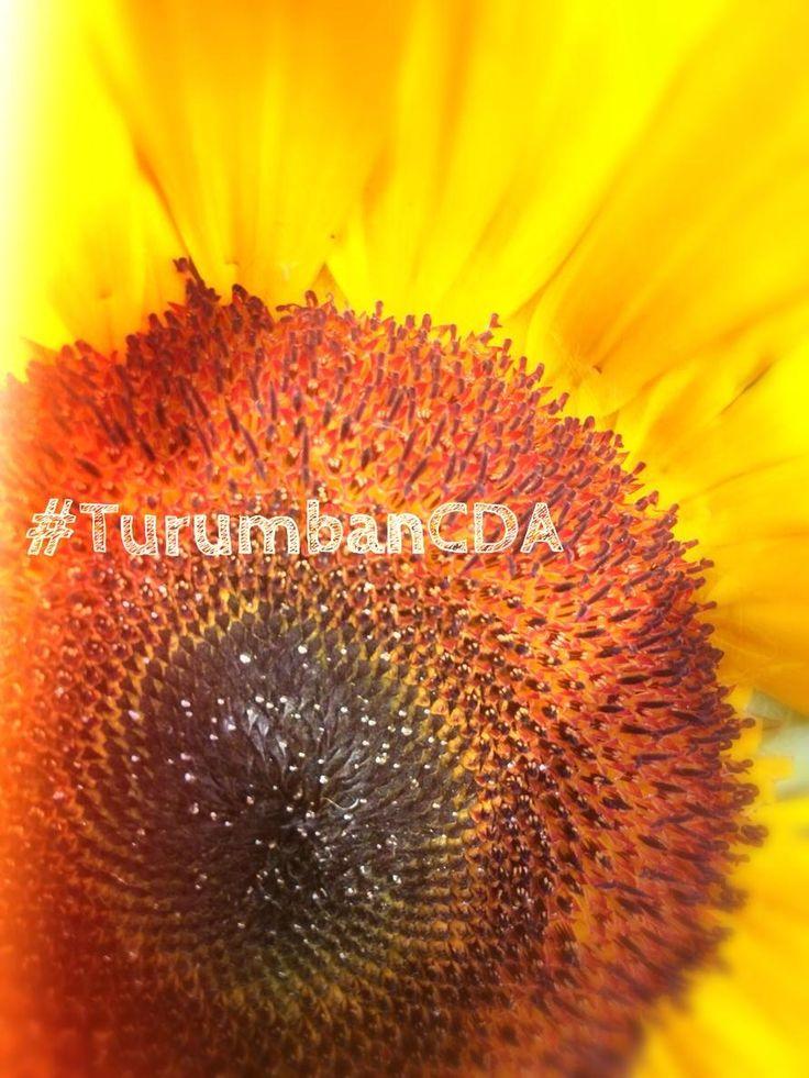Encuéntranos en Twitter : @TurumbanCDA Turumban (Comunidad de Amor) - Propósito de Unidad  www.Turumban.com