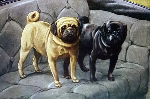 Cute Brindle Pug Puppy Cute Pugs Pug Puppies Pugs