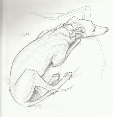 tess sketch beautiful!